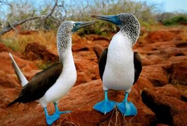 Galápagos es elegido como mejor destino turístico