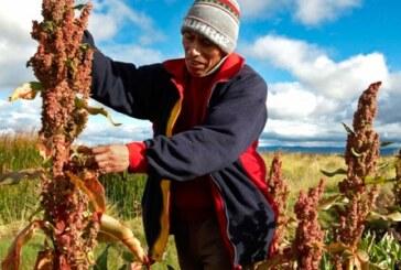 La quinua orgánica, trampolín de campesinos peruanos para salir de la pobreza