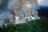 """Las llamas invaden el """"pulmón del planeta"""""""