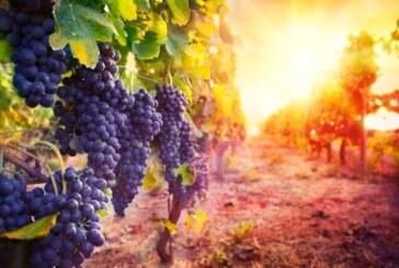 Toscana lidera la producción de vinos